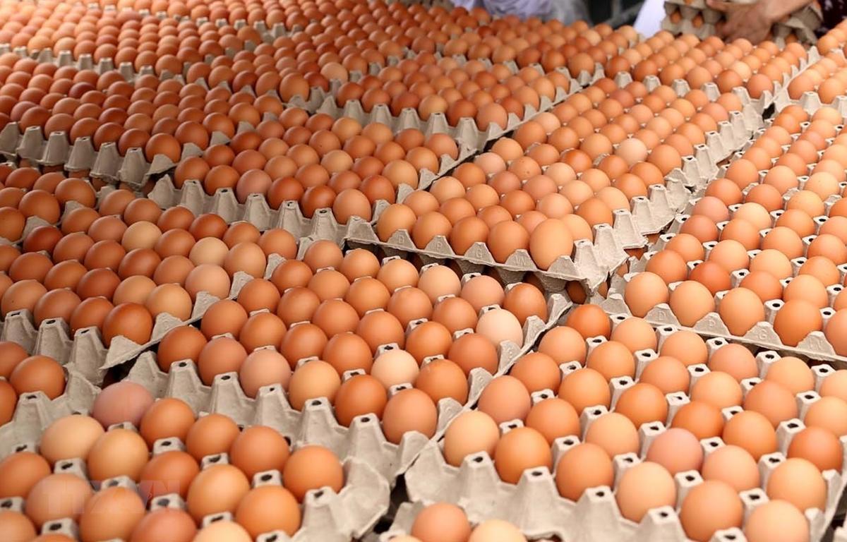Bài học bán trứng